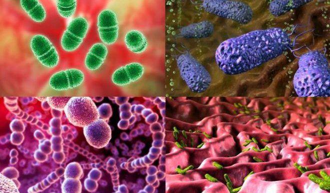Бактерии поселяются в дермальном слое